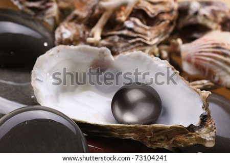 Image of a black pearl in the shell on wet pebbles.