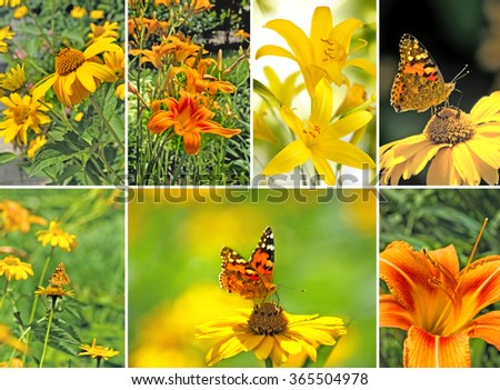 image of a butterfly and flowers closeup
