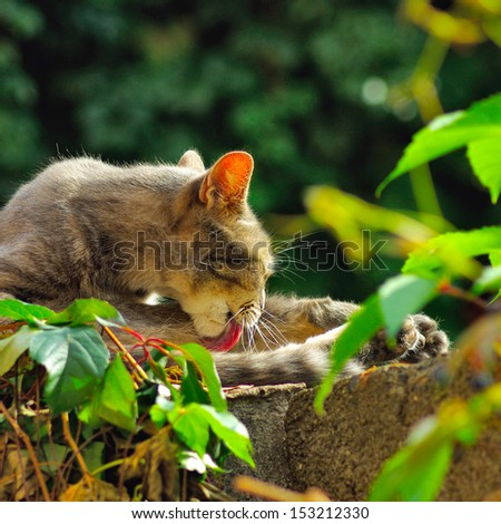 image of a cat in the garden