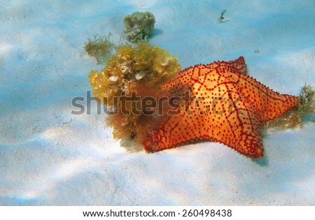 Image of a colorful starfish in the ocean. - stock photo