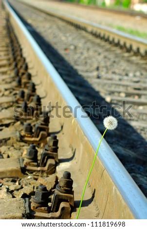 image of a dandelion near the railroad tracks - stock photo