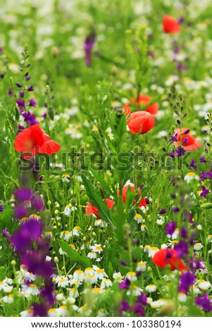 image of a field with spring flowers - stock photo