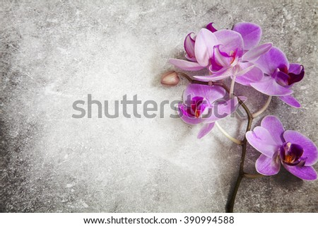 Image of a floral background with orchid stem and stone surface.  - stock photo
