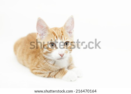 Image of a ginger kitten, isolated.  - stock photo