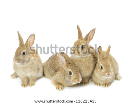 rabbit family stock images royalty free images vectors shutterstock. Black Bedroom Furniture Sets. Home Design Ideas
