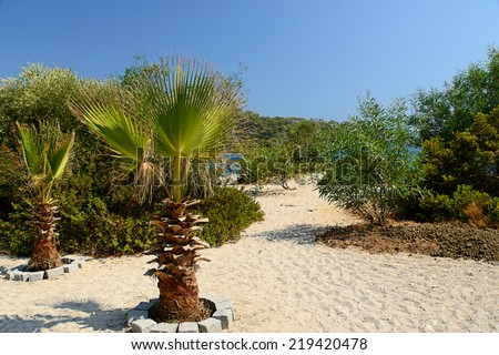 Image of a hidden sandy pathway down to a secret beach location with room for copy space