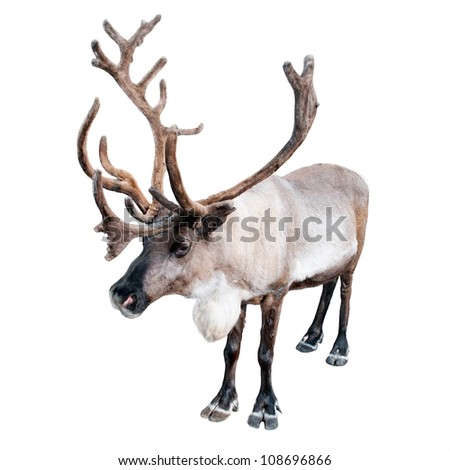 image of a northern deer on a white background