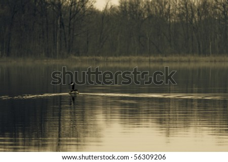 Image of a single canadian goose swimming across a small lake.