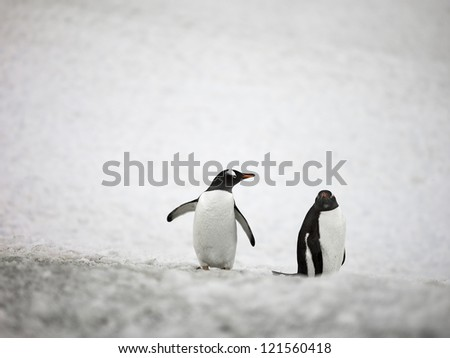 Image of a two penguins in Antarctic.