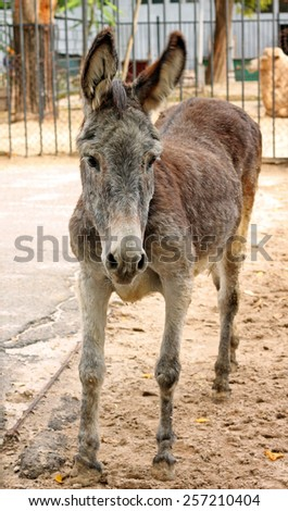 Image of adorable sad donkey at zoo, close-up - stock photo