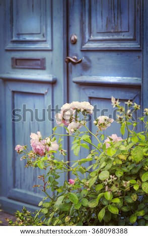 Image of an old blue front door with a rosebush.