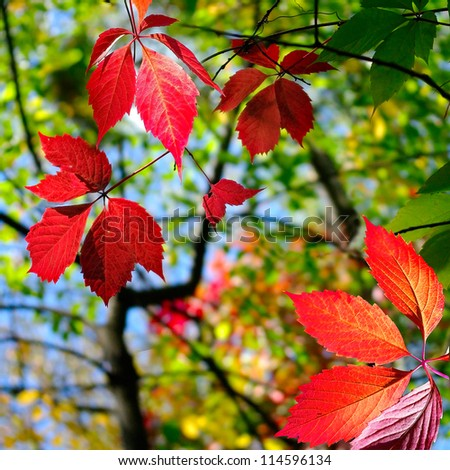 image of autumn leaves in  park - stock photo
