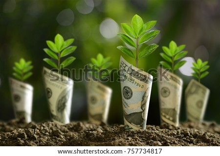 Image of bank notes rolled around plants on soil for business, saving, growth, economic concept