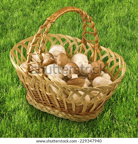 image of baskets with mushrooms in the grass - stock photo
