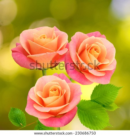 Image of beautiful flowers - stock photo