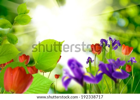 image of beautiful flowers  in the garden