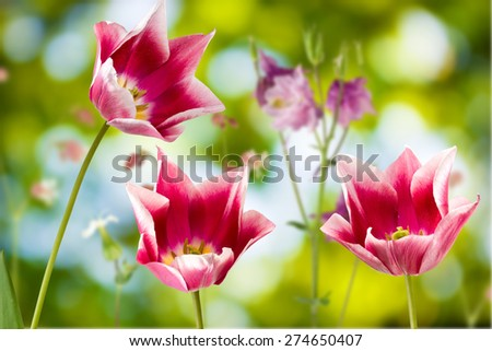 image of beautiful flowers on a green background