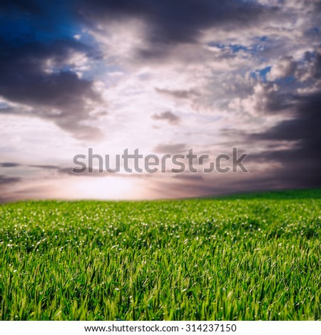 image of beautiful summer or spring wheat field and sky with clouds - stock photo