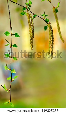 image of birch twigs in a summer park