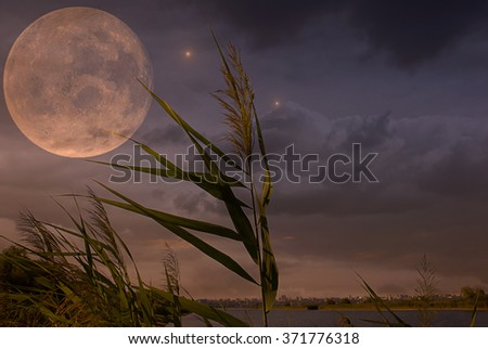 Image of cane and the moon on the sky silhouette