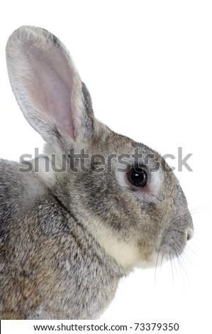 Image of cute grey rabbit head - stock photo