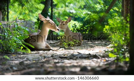 image of deer in a zoo - stock photo