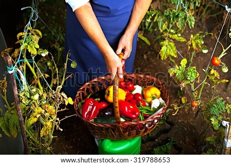 Image of delicious vegetables harvested from the garden. Juicy fresh ripe vegetables straight from the garden in a basket - tomatoes, peppers, eggplants, cucumbers, green peas. Eco lifestyle concept.