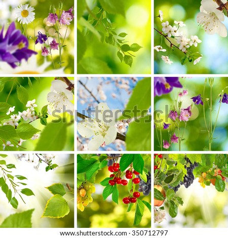 Image of different beautiful flowers in the garden 