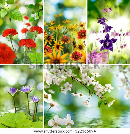image of different plants and flowers