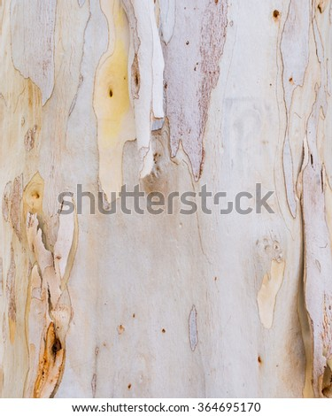 image of eucalyptus tree bark texture for background. - stock photo