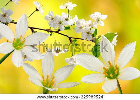 image of flowers and blooming branches on a yellow background - stock photo