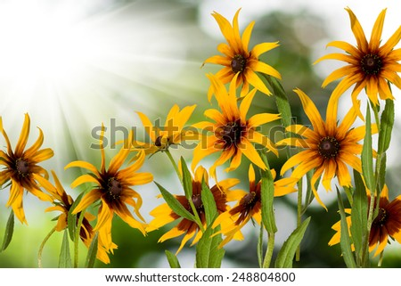 image of flowers in the garden closeup - stock photo
