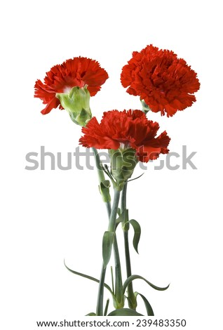 image of flowers on a green background