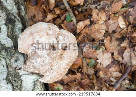 Image of fungus growing on a decaying tree branch on the forest floor - stock photo
