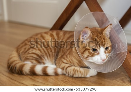 Image of ginger cat on the floor with cone.