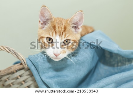 Image of ginger kitten in a basket.