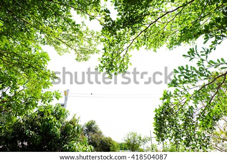 image of green Trees in the Garden.