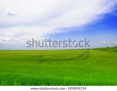 Image of green wheat field and bright blue sky - stock photo