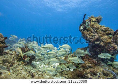 Image of group of fish on coral reef colonies - stock photo