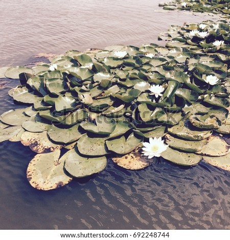 Image of lilly pads floating on still water with vintage filter applied