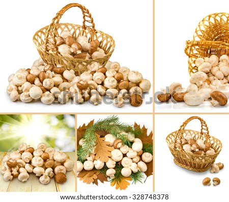 image of many fresh mushrooms  - stock photo