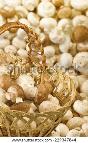 image of many mushrooms - stock photo