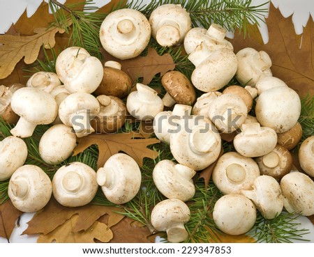image of many mushrooms and autumn leaves closeup