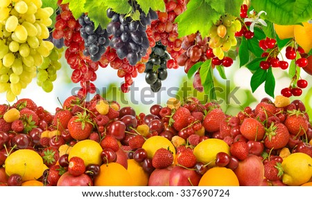 image of many ripe berries and fruit - stock photo