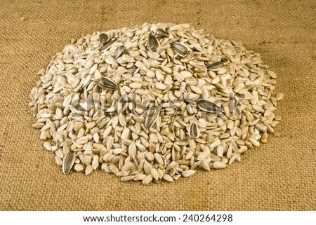 image of many sunflower seeds closeup - stock photo