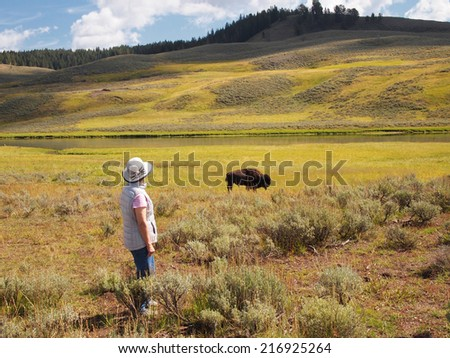 Image of mature woman watching North American Bison (Buffalo) while grazing in open prairie with Yellowstone River in background - stock photo