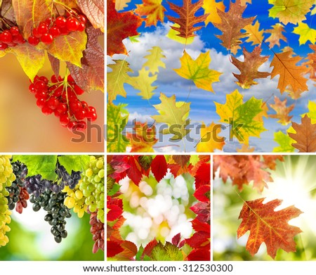 image of mix autumn landscapes closeup