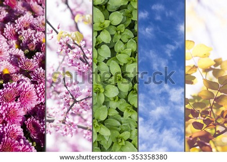 image of mix different flowers, leaves and sky