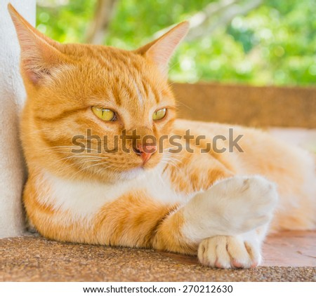 image of moody cat on day time - stock photo