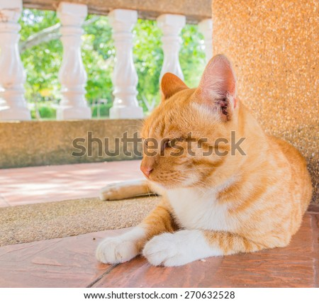 image of moody cat on day time. - stock photo